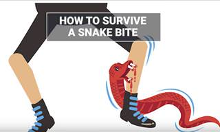 Learn How to Survive Being Bitten by a Snake