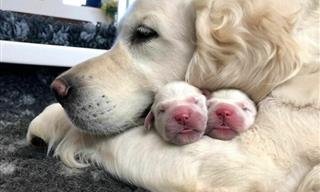 Proud Dog Moms and LOTS & LOTS of Cute Puppies!