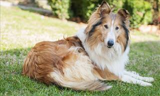 10 of the World's Most Loyal Dog Breeds