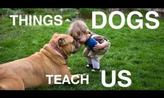 There Is a Lot to Learn From Dogs...