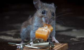 That Is One Smart Mouse!