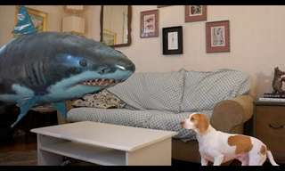This Dog Isn't Scared of Anything, Even a Shark