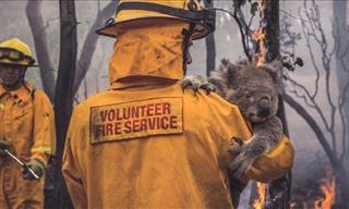12 Inspiring Photos of Australian Animals Saved from the Fire