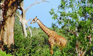 The Beautiful Animals You'll See on Safari!