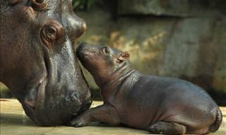 The Love Between a Parent and Their Young