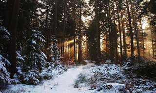 The Beauty of the Mysterious Black Forest!