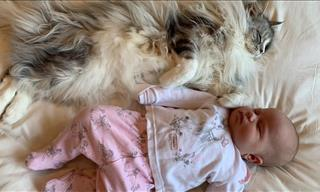 Adorable: The 7 Stages of a Cat Bonding With a Baby