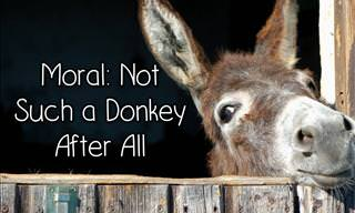 Moral: Not Such a Donkey After All
