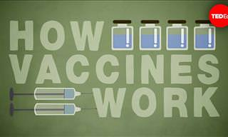 How Vaccines Actually Work