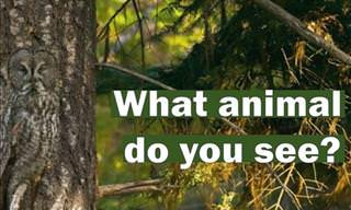 Quiz: Identify the Hiding Animals