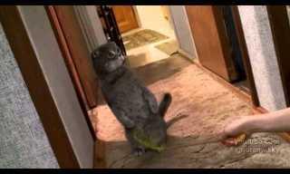 The Cat Guardian - Hilarious!