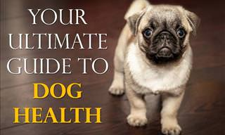 The Ultimate Guide to Your Dog's Health