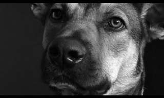 The Love of Dogs - Beautiful!