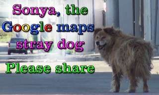 Sonya, the Google Maps Stray Dog Rescue!