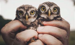 Amazing Close-Ups of Wild Animals