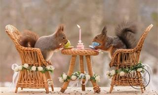 This Photographer Captures Magical Images of Squirrels