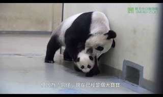 Go Back to Sleep Little Panda - Adorable!