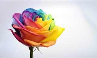 TEST: The Rainbow Personality Quiz