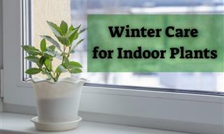 6 Effective Tips on Caring for Your Houseplants in the Winter