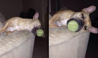 When Pets and Toddlers Act Silly, We Can't Help But Laugh!