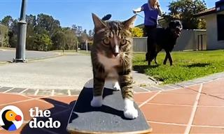 You Have Definitely Never Seen Cats Do Tricks Like This
