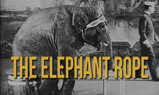 The Elephant and the Rope
