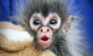 Adorable Monkey Babies You'll Fall In Love With