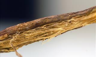 9 Amazing Health Benefits of Using Licorice Root