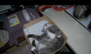 Cats & Boxes: The Love Affair Continues...