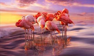 20 Gorgeous Flamingo Pictures and Facts