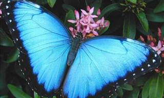 These Butterflies Might Go Extinct Soon...