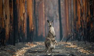 BigPicutre Natural World Photography Contest: The Stunning Winners