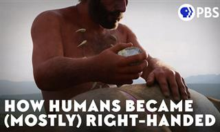 Why Are Most People Right-Handed?