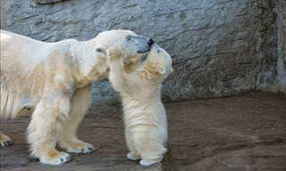 25 Gorgeous Bear Cubs & Their Mothers