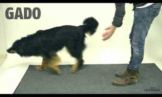 How Will Dogs React to a Magic Trick?