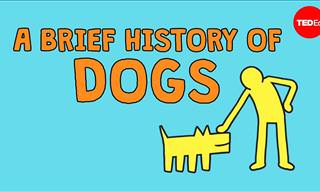 The Fun and Touching History of Dogs