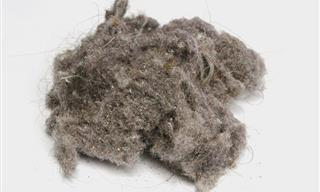 Home Remedies to Treat Dust Allergies