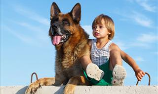 Watch: German Shepherds Protecting Kids and Babies