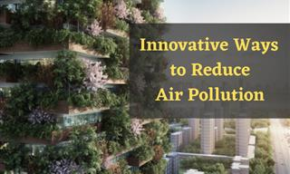 These Global Initiatives Can Curb Air Pollution Levels