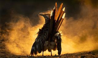 These Award-Winning Bird Photos Are Just So Powerful