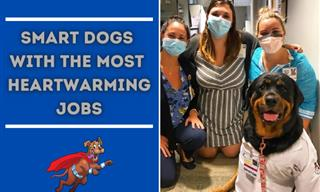 These Hard-Working Pups Make the World a Better Place