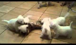 Watch it, Cat, it's a Puppy Attack!