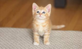 Dear Kitty: A Tribute