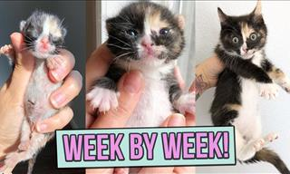 Watch These Adorable Kittens Grow Week by Week...