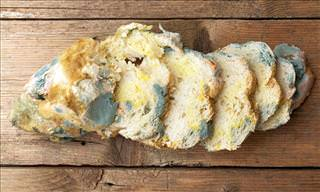 Why You Should NEVER Eat the White Part of Moldy Bread