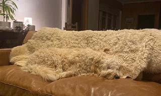 18 Photos That Show Us That Everyday Camouflage Is Real