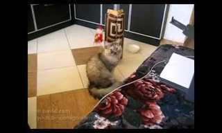 Cats vs. Printers - The Great Rivalry!