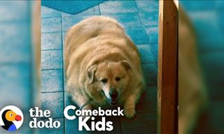 How Kai the Dog Lost 200 Pounds in Just a Year