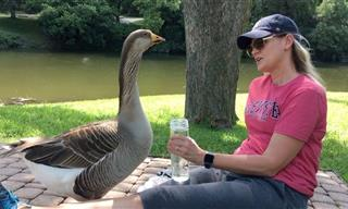 A Lonely Goose Asked For This Woman's Help...