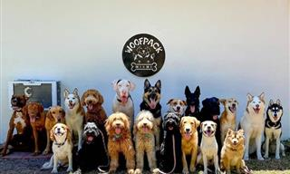 Think Dog Group Photos Are Impossible? You Must See This